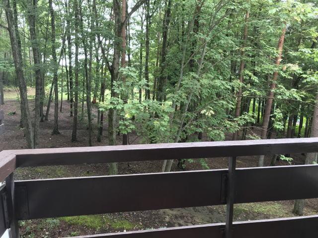 爽快な森林